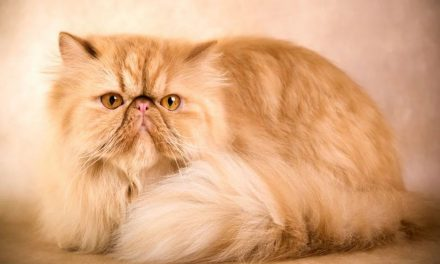 راه های اصولی برای نگهداری گربه چیست؟