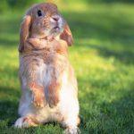 آشنایی با بیماری تولارمی خرگوش