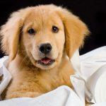 آموزش ادرار به سگ ها